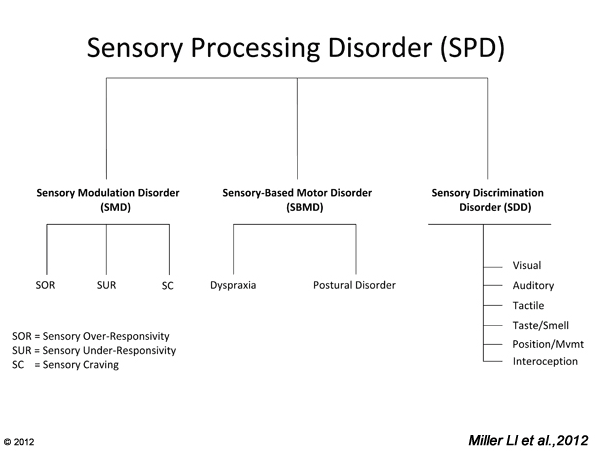Is Sensory Processing Disorder Real >> Subtypes Of Spd Star Institute